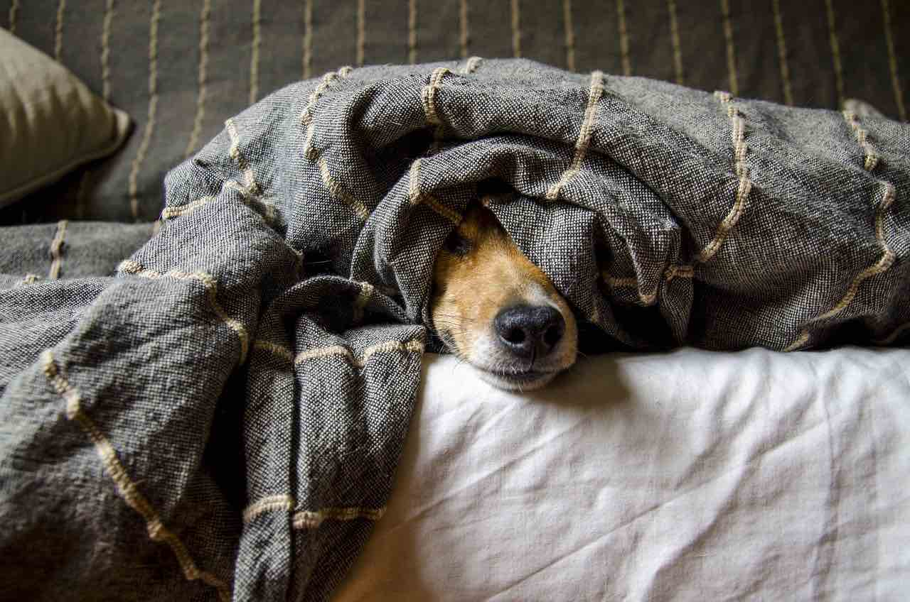 Hund im Strandkorb
