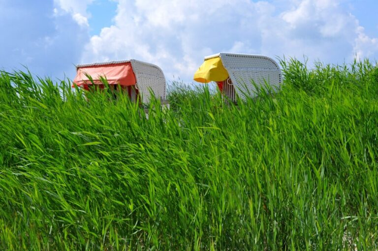 Strandkorb im Gras versteckt