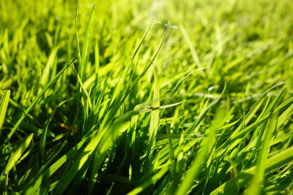 grass 2944182 1280 1 by Strandkorbtester.de